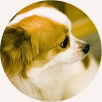 ペットと暮らせる小型犬可物件